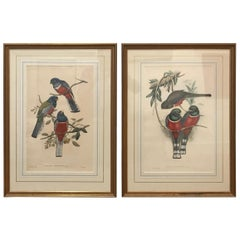 Pair of Large Antique Hand Colored Lithographs by J. Gould