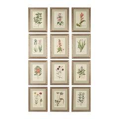 Set of 12-18th Century Botanical Engravings by Georg Wolfgang Knorr