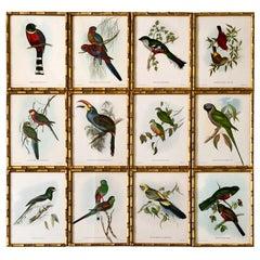Set of 12 Exotic Birds