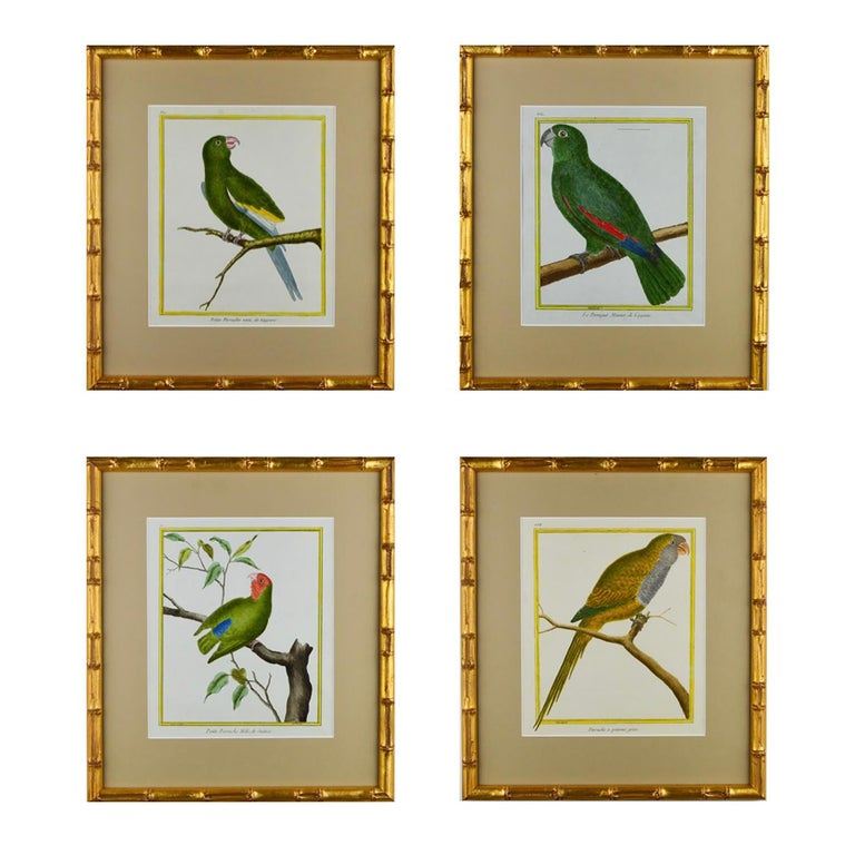 French Set of 8 18th Century Martinet Parrots For Sale