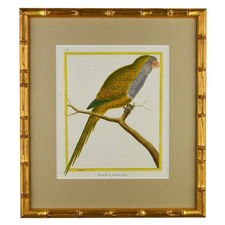 18th Century and Earlier Set of 8 18th Century Martinet Parrots For Sale