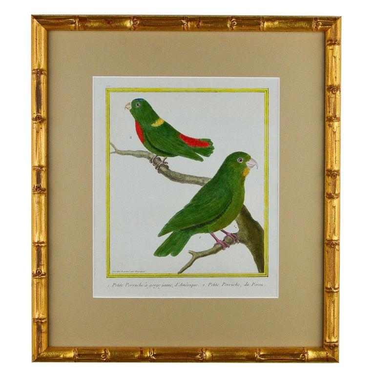 Paper Set of 8 18th Century Martinet Parrots For Sale