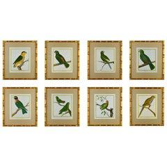 Set of 8 18th Century Martinet Parrots