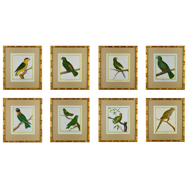 Set of 8 18th Century Martinet Parrots For Sale