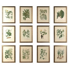 Set of Twelve Weinmann Botanical Engravings