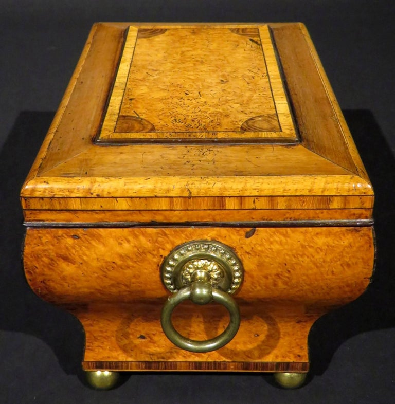 Very Fine Biedermeier Tea Caddy of Bombe Form in Exotic Woods, circa 1830 For Sale 4