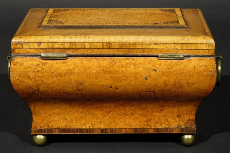 19th Century Very Fine Biedermeier Tea Caddy of Bombe Form in Exotic Woods, circa 1830 For Sale