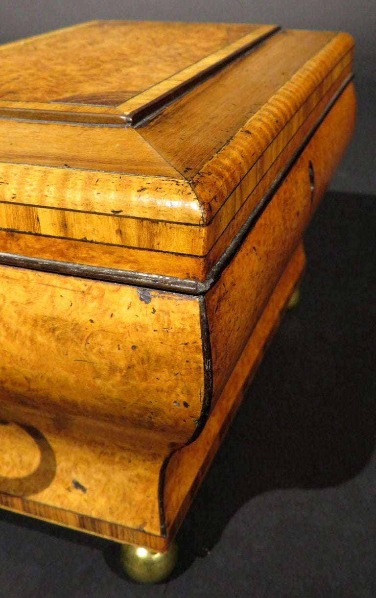 Very Fine Biedermeier Tea Caddy of Bombe Form in Exotic Woods, circa 1830 For Sale 3