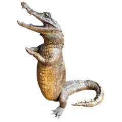 Victorian Taxidermy Standing Crocodile with Clasped Hands and Open Mouth
