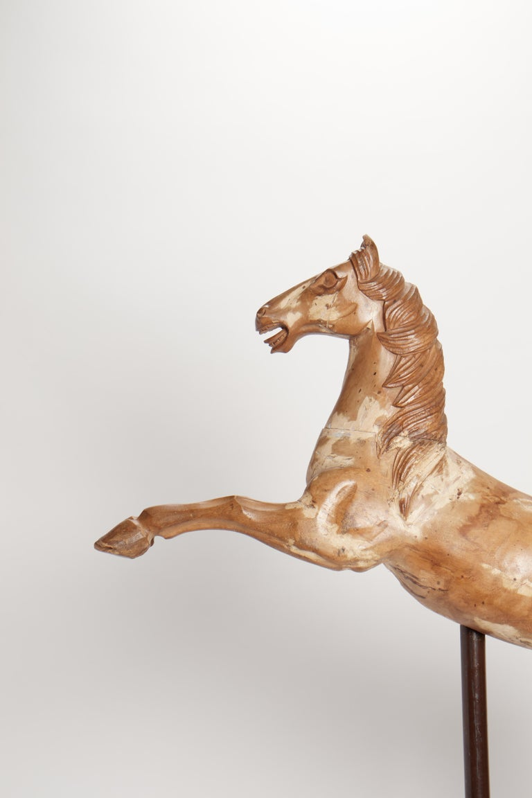 An Italian wooden sculpture of a rampant carrousel horse. Modern metal base. Measure refers to the horse only. Italy, circa 1750.