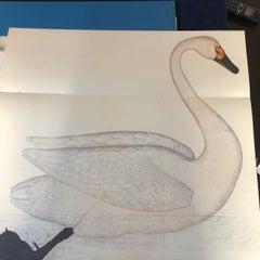 Rudbeck Birds - Limited First Edition Portfolio - #482 of 1499 portfolios