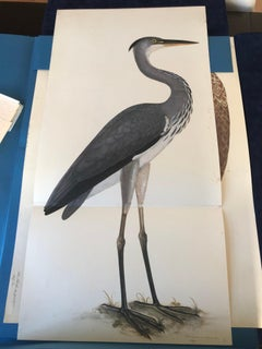 Rudbeck HERON - Limited First Edition Portfolio - #482 of 1499 portfolios