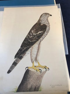 Rudbeck COOPER HAWK - Limited First Edition Portfolio - #482 of 1499 portfolios