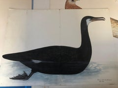 Rudbeck CORMORANT - Limited First Edition Portfolio - #482 of 1499 portfolios