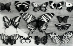 Collection - XXI Century Figurative Copperplate Print Butterflies Black & White
