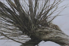 Willow (a bough) - XXI Century, Contemporary Watercolor Painting, Tree, Nature