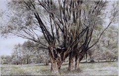 Willows - XXI Century, Contemporary Figurative Watercolor Painting, Tree, Nature