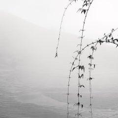Vietnam 5 - Black and White Photography - Plexiglas
