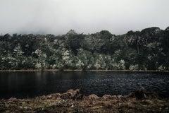 Luis Pass Forest, New Zealand