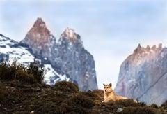Torres del Puma (Cougar)