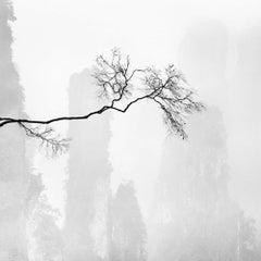 Celeste 1, China
