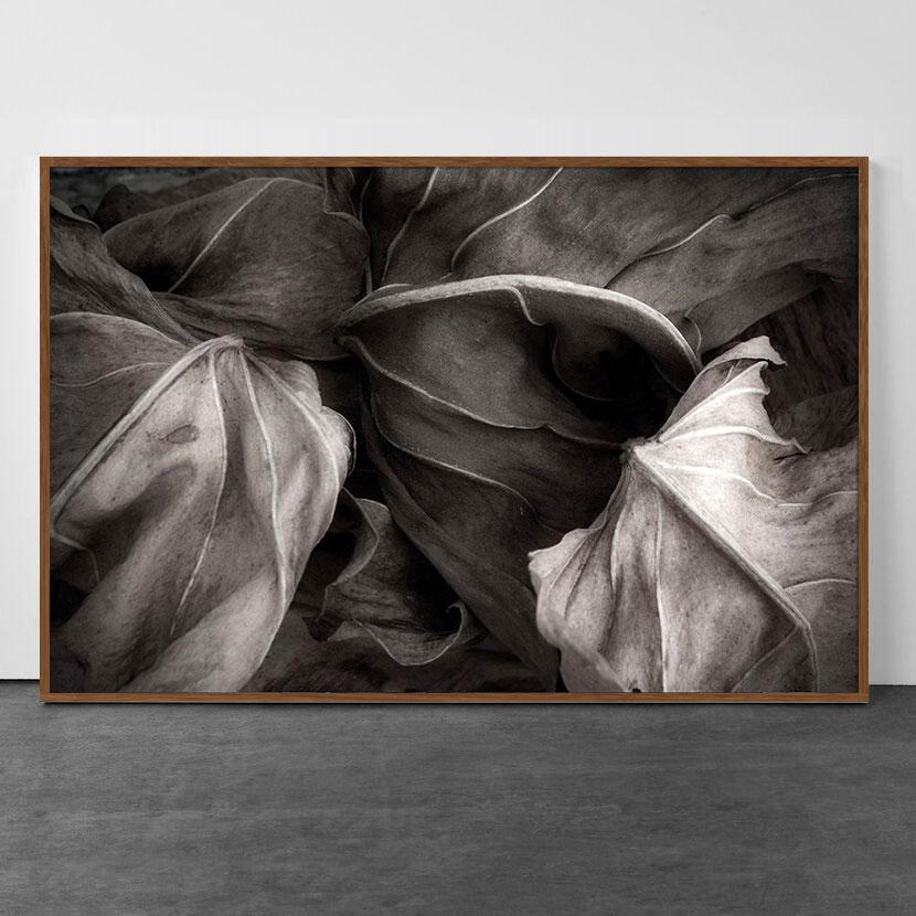 The secret life of Leaves 3 - Black and White - Nature Photography