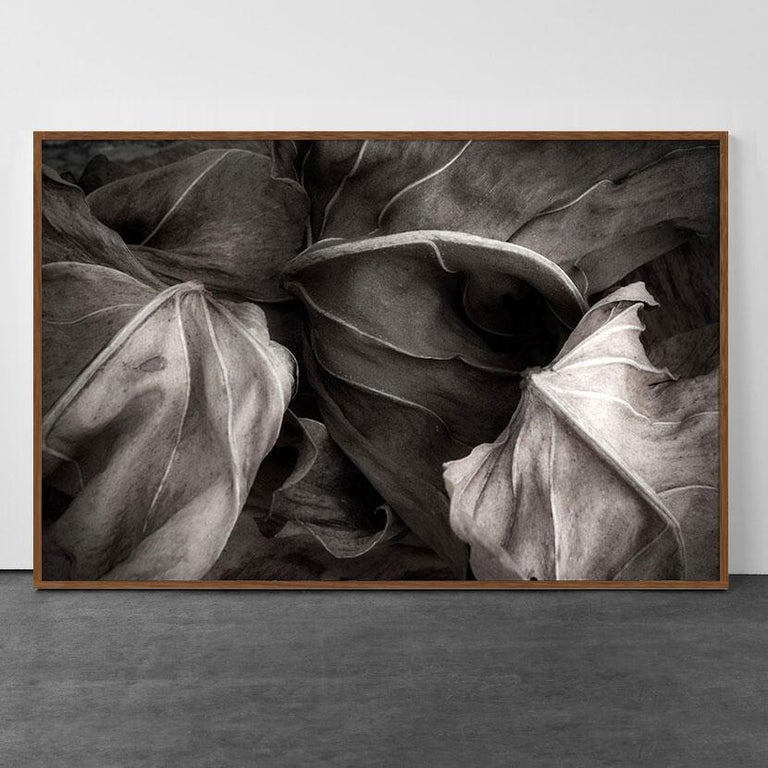 Jose Bassit Color Photograph - The secret life of Leaves 3 - Black and White - Nature Photography