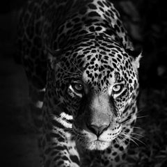 Eyes of a Jaguar (Animal Print, Black and white Photography)