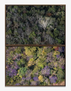Daniel Mansur - Jambeiro Woods (Forest) (Diptych Photography)
