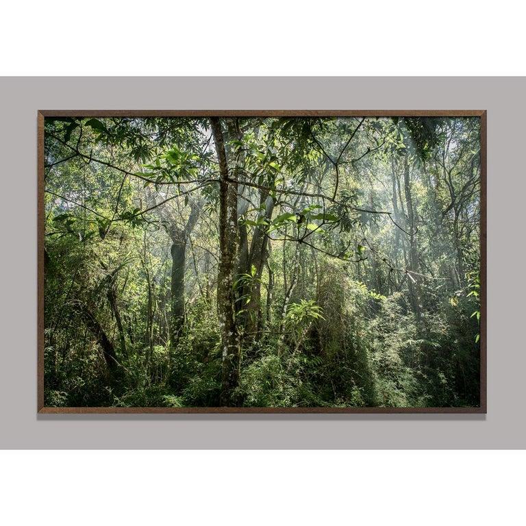 Daniel Mansur Color Photograph - In Paradisum #8 Inside a Forest - Landscape Photography