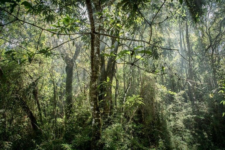 In Paradisum #8 Inside a Forest - Landscape Photography - Gray Color Photograph by Daniel Mansur