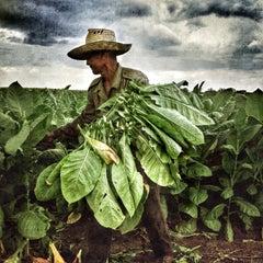 Manuello Paganelli, Tobacco Farmer, Cuba