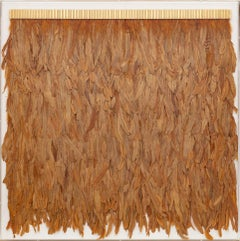 Marigold Feathers, Icarus Collection, Specimen