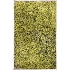 Eden Moss 1, Specimen, Nature