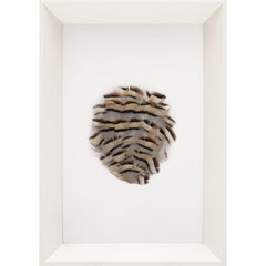 Victoria Mounted Feathers, small, No. 1, framed