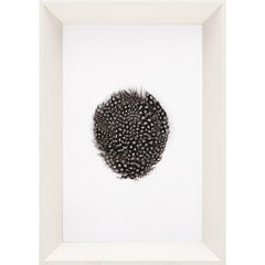 Victoria Mounted Feathers, small, No. 3, framed