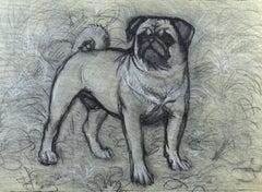 Bertie the Pug - 20th Century British chalk drawing