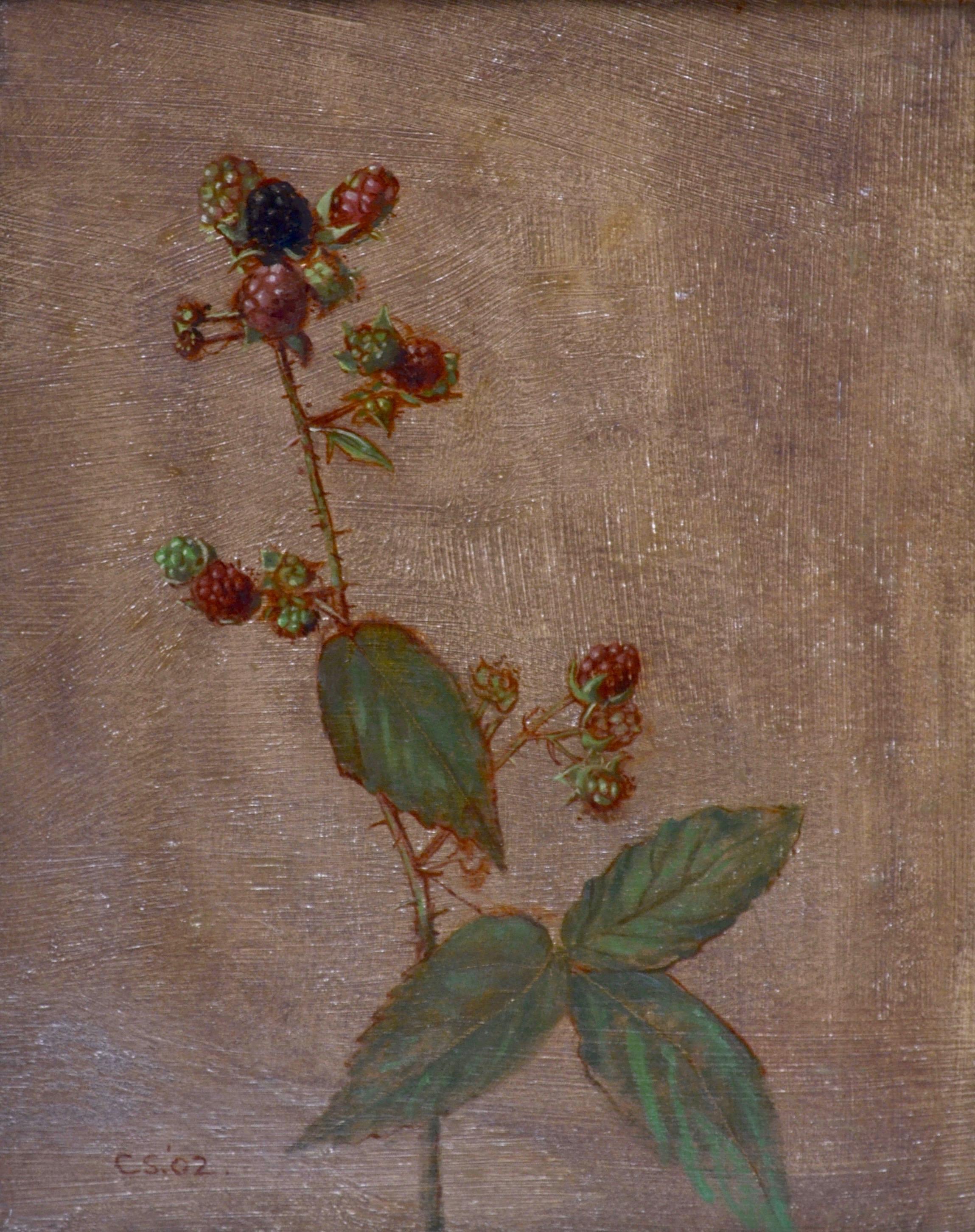 Blackberries - 21st Century still life oil on board by Carolyn Sergeant