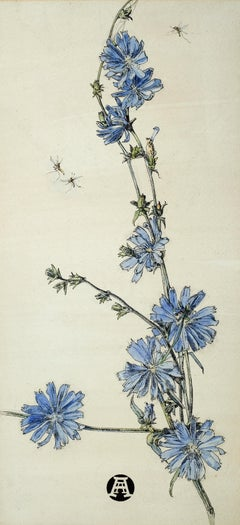 Succory - 20th Century British botanical watercolour of Chicory by Anna Airy