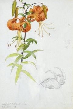 Lilies - British Pre-Raphaelite watercolour drawing of a Lily