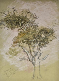 Oak Tree, Parham - 20th Century drawing by British Symbolist artist Shackleton