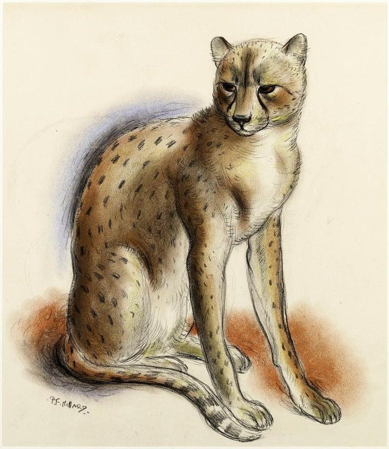 "Patrick Ferguson Millard Animal Art - ""Cheeta"" - 1930s British chalk drawing of a chetah by Patrick Millard"