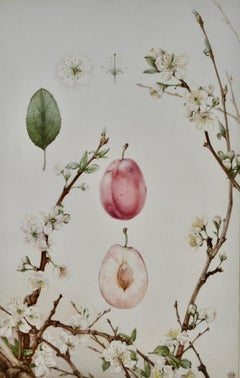 Plums - Early 20th century British Botanical illustration by Detmold