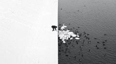 A Man Feeding Swans in the Snow - Grand Prix NYPH New York Photo Festival 2015