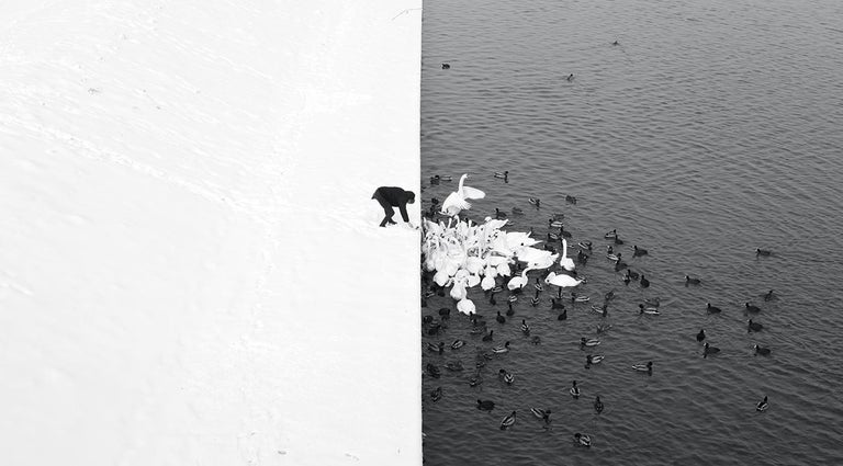 Marcin Ryczek Black and White Photograph - A Man Feeding Swans in the Snow - Grand Prix NYPH New York Photo Festival 2015
