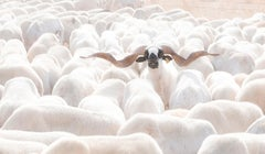 Out Of The Herd - Contemporary Minimalist And Symbolic Photography