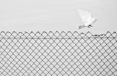Liberation - Contemporary Minimalist And Symbolic Photography, Black And White