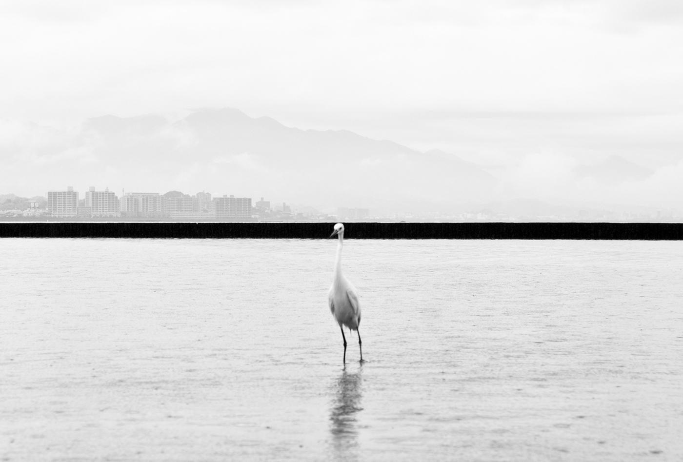 Hiroshima – Phoenix Rising from the Ashes,  Minimalist And Symbolic Photography