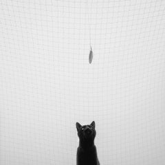Catching a Feather  - Cat,  Contemporary Minimalist And Symbolic Photography