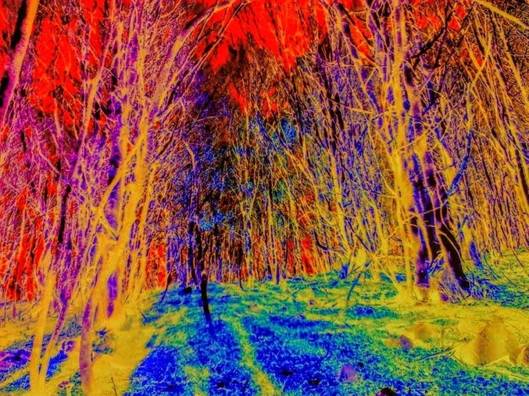 Gerard Cadevall Color Photograph - Life in Color 4
